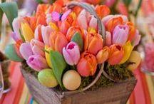 Spring Has Sprung / Spring decor, crafts, foods, design, and more!