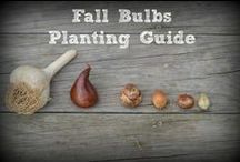 Fall Fun / From arts and crafts, DIY projects, family traditions, and more, fall is a fun time of year!