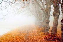 Season / Autumn-Fall colors