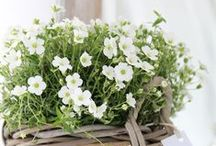 Home / Bouquet