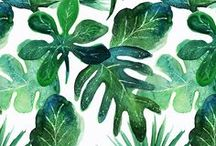 Monstera | Tropical Monstera Leaves by Indie Designers on Fabric, Wallpaper, & Gift Wrap / Beautiful monstera leaf designs by indie designers on fabric, wallpaper, and gift wrap.  Everything from hand drawn and painted watercolor monstera to bold graphic designs in bright green.  Monstera deliciosa is a species of flowering plant native to tropical rainforests of southern Mexico, south to Panama.  We love these beautiful monstera designs on home decor, wallpaper, and gifts!  #monstera #plants #botanical #design #designer #wallpaper #fabric #watercolor #watercolorbotanical #leaves