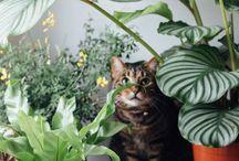 | Plants