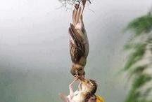 BIRDS / by Kit Chamberlain