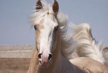 Horses - Amazingly Wonderful and Noble!