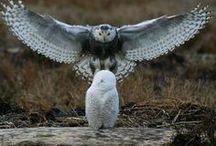 I love animals and birds.... photos