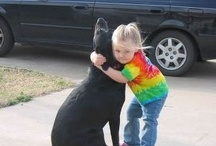 Dogs are a girl's best friend! / by Kelsey Branch
