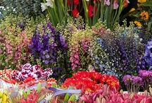 Gardening Tips&Ideas