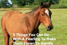 Blog Posts / Here you will find posts from my blog about horses, training, building relationships with horses, horse agility, holistic products and methods.