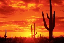 Mostly Arizona / Western scenery / by Gail Richter