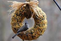 Bird's Eye View / All things birds, birdhouses, bird feeders, and more.  / by Sassy Duck Finds