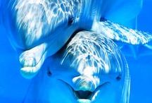 Marine animals / by Lea Guarino