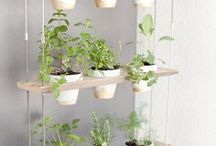 Growing Herbs for Beginners / Growing herbs for beginners includes a list of herbs to grow, herbs to grown indoors, herbs to grow outdoors, herbs for cooking, easy herbs to grow, herb ideas, what herbs to grow, planting herbs, growing herbs tips, and more!