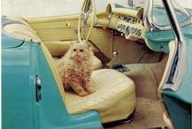 Meow~ kitty