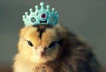 Crown me Queen...Bee