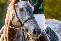 ponies / by Jenna Beam