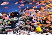 Aquariums / by Nat Tarbox