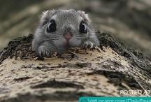 RIDICULOUSLY Cute! / by Martha Coye