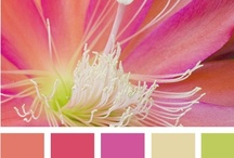 Color Palettes / by Martha Coye