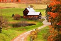 Autumn / by Michelle Cromer