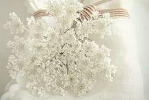 white love / white inspiration. inspiración en blenco