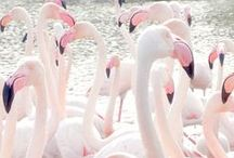 all things flamingo. / be a flamingo in a flock of pigeons