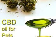 Hemp 4 Everyone / Hemp 4 Everyone is a science-based brand that produces the highest quality CBD Oil products for adults, children and pets.