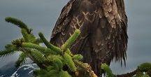 ptaki / ptaki leśne oraz ptactwo domowe