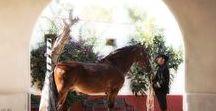 Five Foule Equestrian Fashion / Five Foule for Artequus Theatre Equestre