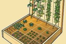 Backyard Gardening / Sharing ideas on how to grow a lot of food in small spaces.