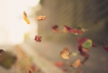 Fall-ing in ♥