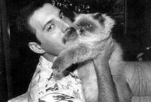 Freddie and the Cats :)
