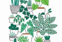 ILLUSTRATION: PLANTS