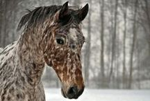 Inspiration / Inspiration for horse lovers