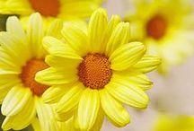 YELLOW is sunshine  / by ilvi