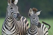 Animals Kingdom / by ilvi
