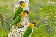 birds / by ilvi