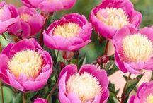 in full bloom /  ✿ ✿ ✿ ✿ ✿ / by ilvi