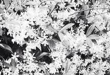 flowers & plants.