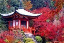 Japan - Tokyo and Kyoto