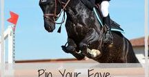 Horse Bloggers / * Shared Group Board * Horse Blogs | Horse Bloggers | Horse Blog Names | Horse Blog Ideas | Pin and share your favourite Horse Blogs here | To join as a collaborator send an email to horsesforsale@outlook.co.nz #HorsesForSaleNZ #HorseBlogs