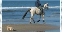 Horse Holidays / Take a Horse Holiday | Horse Holidays | Horse Holiday Ideas | Horse Holiday Photos | Horse Holiday Pictures | Equestrian Holidays