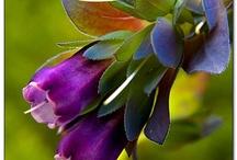 Flowers~colorful blooms / by Dee Webb