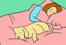 Cosas de perros / Cosas para cuidar a tu perro ✨