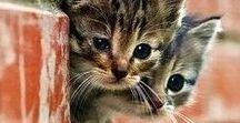Cats   / Kleine und große Katzen