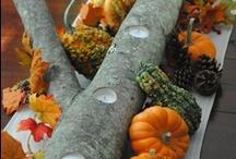 fall favorites / by Becky Finnegan