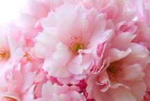 Flour / 花々