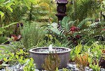 Green Garden / by Dina Cordero