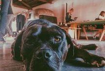 #dogsatwork