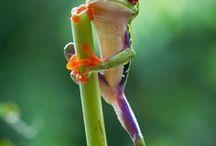 Wildlife   wereldwijd / Oogverblindende foto's van wildlife wereldwijd!