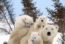 Wildlife   Canada / De mooiste wildlife foto's uit Canada!
